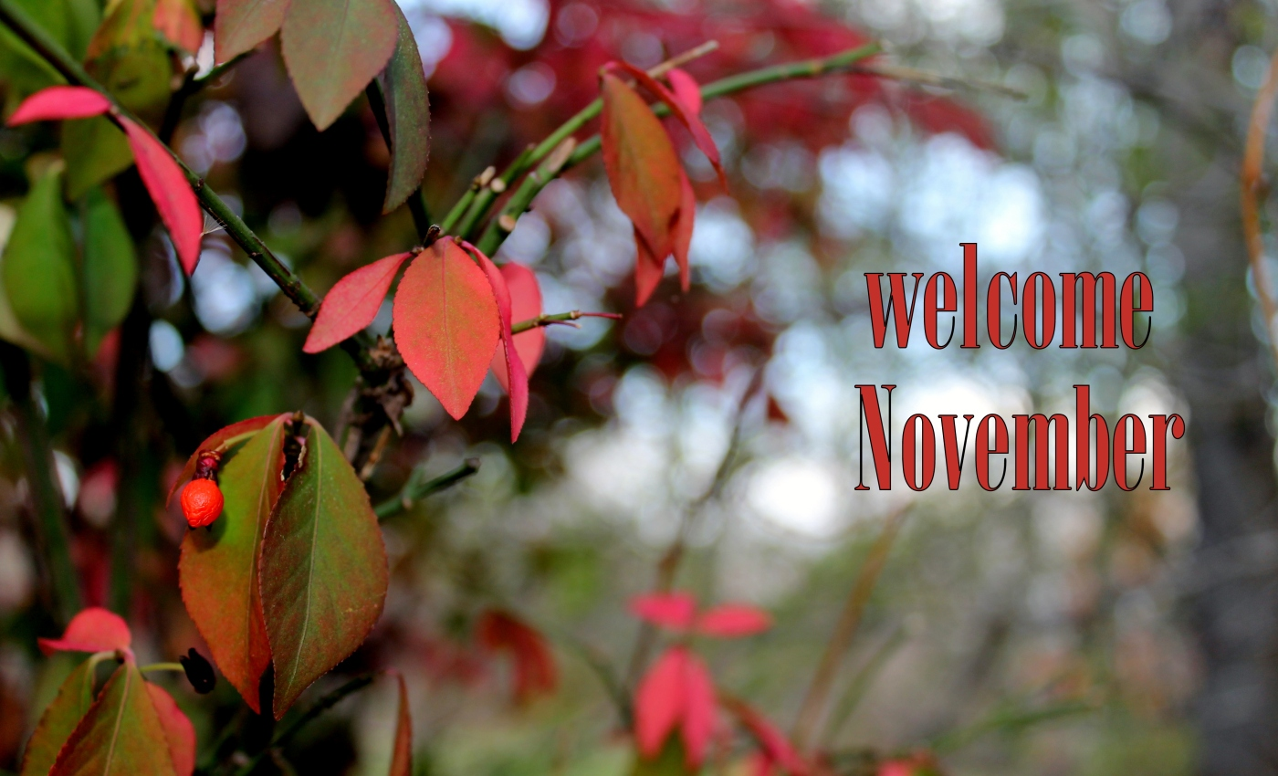 Welcome November Photos